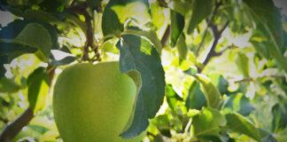 Plastikowe pojemniki na jabłka - higiena i bezpieczeństwo